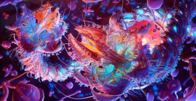 ZBrush: Visualização biomédica levada a novas alturas