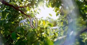Tutorial Blender: Renderização da natureza em close-up